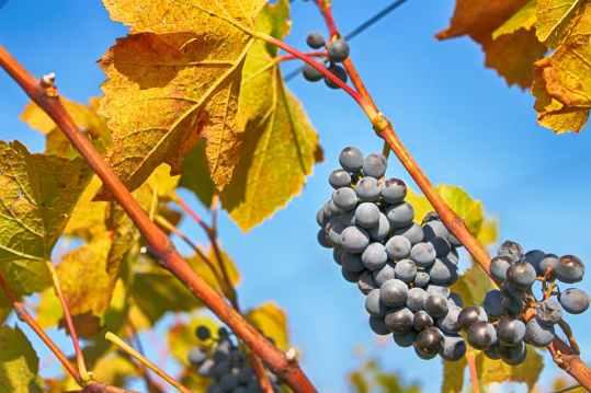 Photo by Tofros.com on Pexels.com